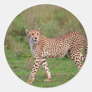 Cheetah Round Stickers