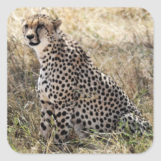 Cheetah Sticker 2