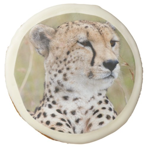 Cheetah Sugar Cookie