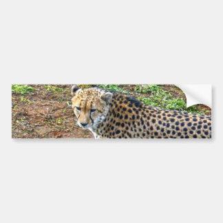 Cheetah_Tactic, _ Pegatina Para Coche