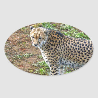 Cheetah_Tactic,_ Oval Sticker