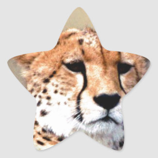 Cheetah Tear Marks Hakunamatata Star Sticker
