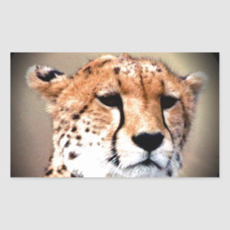 Cheetah Tear Marks Hakunamatata Stickers