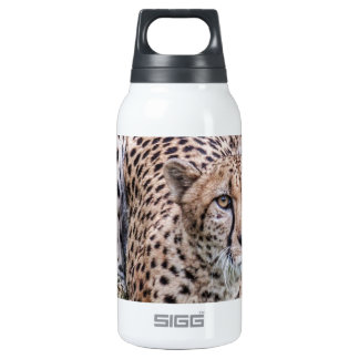 Cheetah Thermos Water Bottle