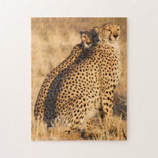 Cheetah, Two males Jigsaw Puzzle