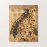Cheetah, Two males Jigsaw Puzzles