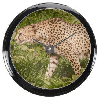 Cheetah Walking In A Field, Animal Photography Fish Tank Clocks