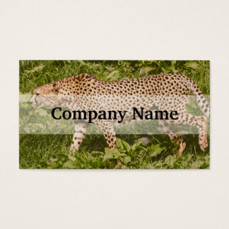 Cheetah Walking In A Field, Animal Photography Business Card