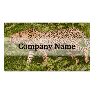 Cheetah Walking In A Field, Animal Photography Double-Sided Standard Business Cards (Pack Of 100)