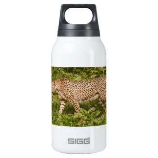 Cheetah Walking In A Field, Animal Photography Insulated Water Bottle