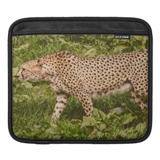 Cheetah Walking In A Field, Animal Photography iPad Sleeves