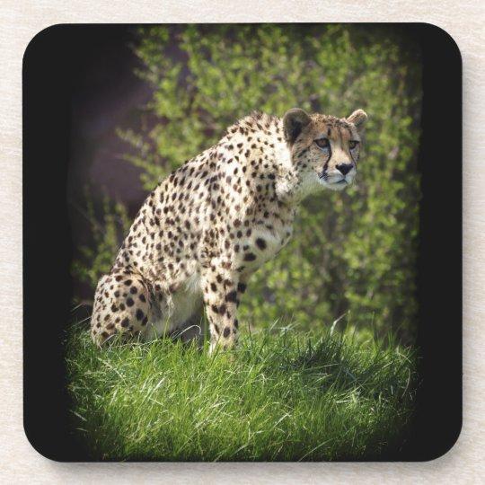 Cheetah Wild Cat Animal-Lover Wildlife Coasters