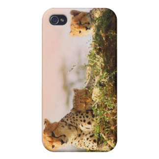 Cheetah wildlife photography iPhone 4 cases