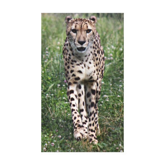 Cheetah wrapped canvas stretched canvas print