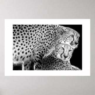 Cheetahs #1 poster
