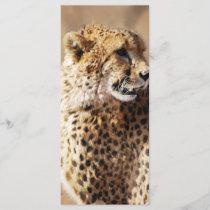 Cheetahs beauty in Africa