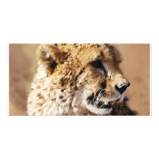 Cheetahs beauty in Africa Card