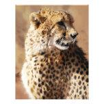 Cheetahs beauty in Africa Letterhead Design