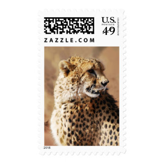 Cheetahs beauty in Africa Stamps