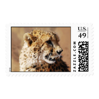 Cheetahs beauty in Africa Postage Stamps