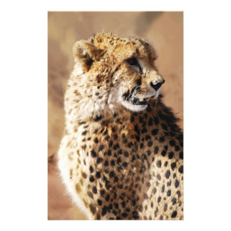 Cheetahs beauty in Africa Stationery