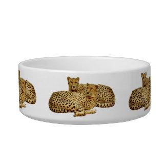 Cheetahs Bowl