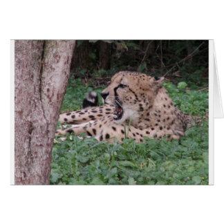 Cheetah's breath cards