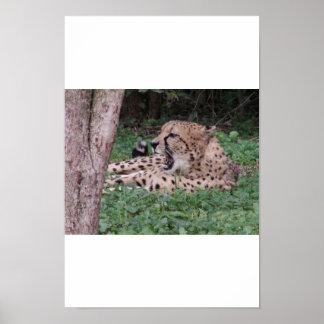 Cheetah's breath poster