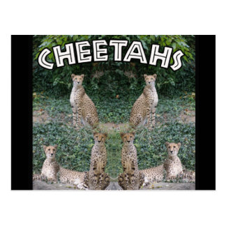 CHEETAHS - BUILT FOR SPEED POST CARDS