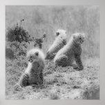 Cheetah's cubs posters