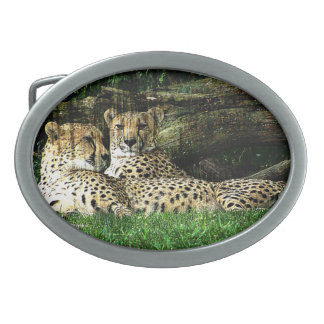 Cheetahs Lounging Grunge Oval Belt Buckles