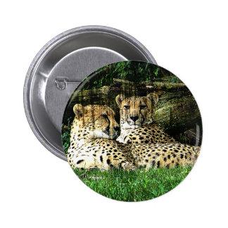 Cheetahs Lounging Grunge Pinback Buttons