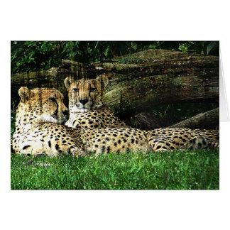Cheetahs Lounging Grunge Card
