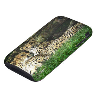 Cheetahs Lounging Grunge iPhone 3 Tough Covers