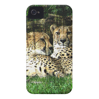 Cheetahs Lounging Grunge Case-Mate iPhone 4 Case