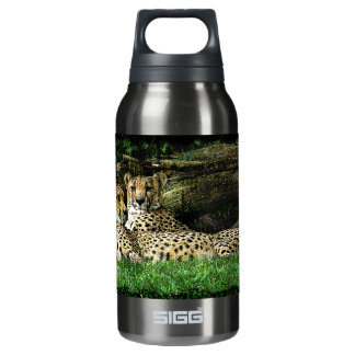 Cheetahs Lounging Grunge Insulated Water Bottle