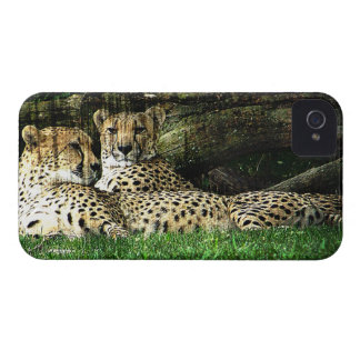 Cheetahs Lounging Grunge iPhone 4 Covers