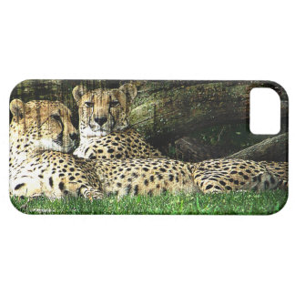 Cheetahs Lounging Grunge iPhone 5 Covers
