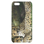 Cheetahs Lounging Grunge iPhone 5C Case