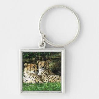 Cheetahs Lounging Grunge Keychain