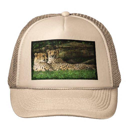 Cheetahs Lounging Grunge Mesh Hats