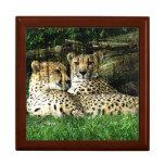 Cheetahs Lounging Grunge Trinket Boxes