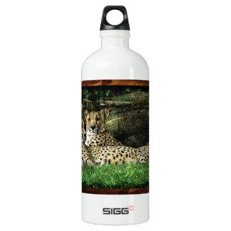 Cheetahs Lounging Grunge Water Bottle