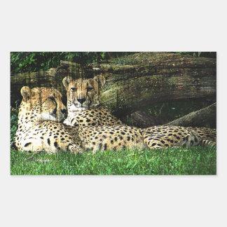Cheetahs Lounging Rectangular Sticker