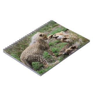 Cheetahs Playing Notebook