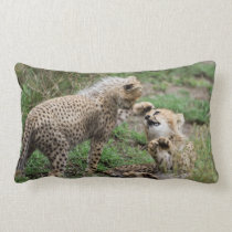 Cheetahs Playing Pillow