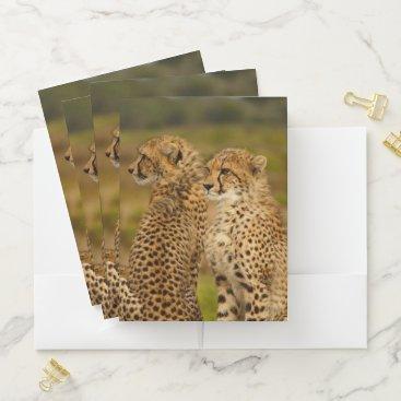 Beach Themed Cheetahs Pocket Folder