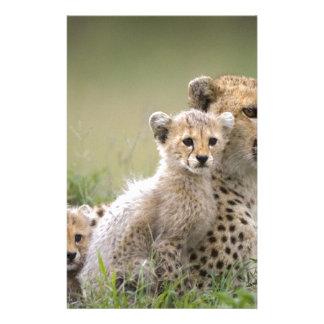 Cheetahs Prospering Stationery