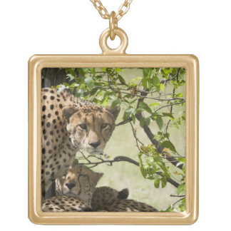 Cheetahs rest in the shade square pendant necklace