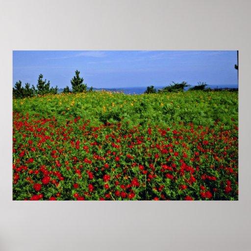 Cheju-Hacen - las flores en las flores de Chungmun Póster